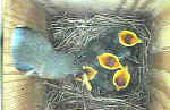 BOÎTE nid pour oiseaux avec WEBCAM