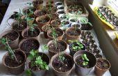 Départ de graines : une étude Comparative sur les méthodes d'intérieur pas cher