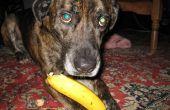 Comment manger une banane comme un chien