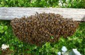 Recueillir un essaim d'abeilles