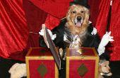 Incroyable magicien sciage Assistant dans la moitié des Costumes