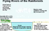 Les forêts « font » pluie et pouvons nous prouver ou non ?  La pompe biologique.