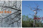 Comment évaluer un arbre mort