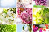 Meilleur jardin plantes à se développer dans la saison d'hiver