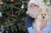 Comment faire une barbe de Santa de poil de chien