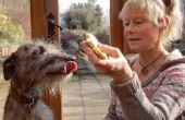 Les chiens et les feux d'artifice - avec Ulrike et Lizzie