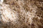 Germer le Quinoa