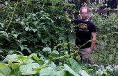 Treillis de jardinage vertical pour tomates ou courge