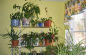 Avant que je vous Invite à, comment vous sentez-vous sur les plantes d'intérieur ?