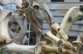 Sculptures d'os