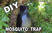 Comment faire un Ovitrap piège moustique