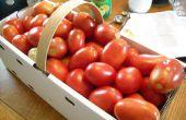Mise en conserve de tomates = Summertime tout au Long de l'année !