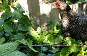 Les haies comestibles - tirer le meilleur parti de votre terrain avec arbre fourrage et de foin de l'arbre