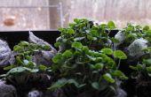 Le jardinage organique fenêtre