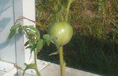 Comment planter des légumes ou plantes (dans des pots de plante d'intérieur)