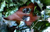 Congeler des verts jardins dans des bacs à glaçons