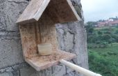 Bird simple alimentation maison