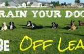 Apprenez à votre chien de venir à vous (sans avoir à tenir la laisse!)