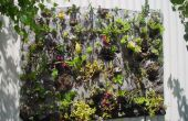 Succulente Quilt