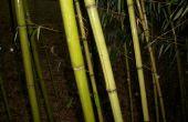 Tube de rangement bambou