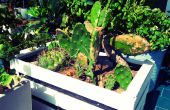 Fruits en bois boîte de planteur