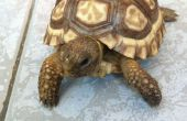 Habitat Table basse tortue
