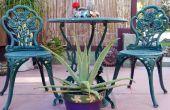 Une plante avec but : Comment prendre soin de l'Aloe Vera