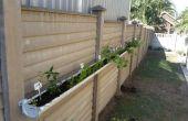Petit espace vivant de jardin d'herbe/veg
