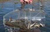 Comment faire un poisson piéger en 30 sec