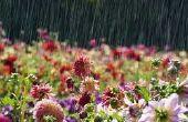 Système de mesure des précipitations pour une ruche