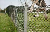 Garde chiens de sauter par-dessus la clôture