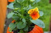 Citrouilles de Pot de fleurs