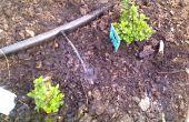 Arroser votre jardin avec de l'eau de lessive gris