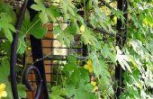 Réaffecter sert de clôtures treillis de jardin