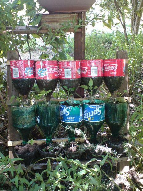 Jardin d\'herbes aromatiques de bouteille – un projet de ...