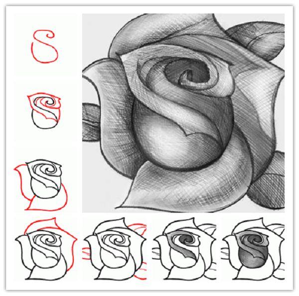 Dessin D Une Rose Realiste Etape 1 Dessin De La Base Et Tout Le