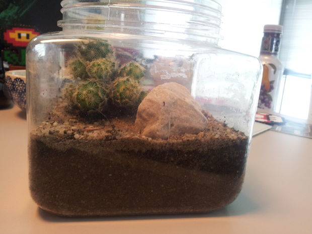 Comment Faire Un Terrarium De Cactus Moyen Facile Et Pas Cher