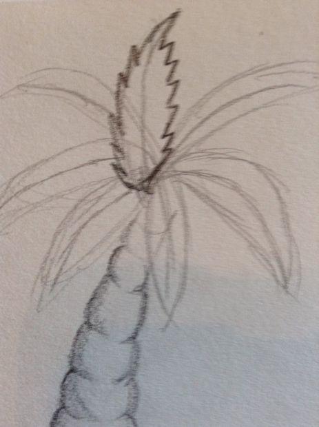 Comment dessiner un palmier tape 5 fronde d tail - Comment couper un palmier mort ...