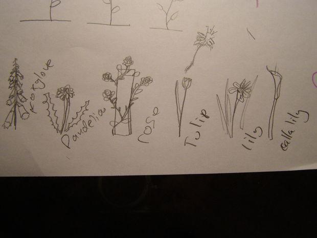 Comment Dessiner Des Fleurs Tubefr Com